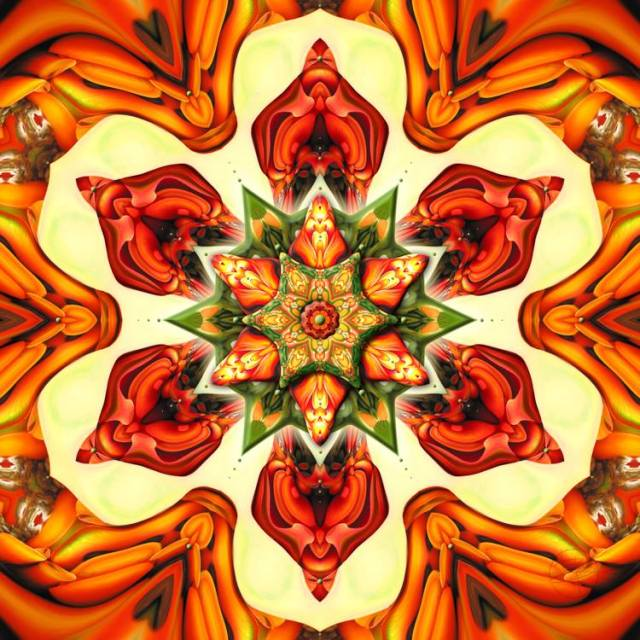Erythrina on Fire by Karen Hochman Brown