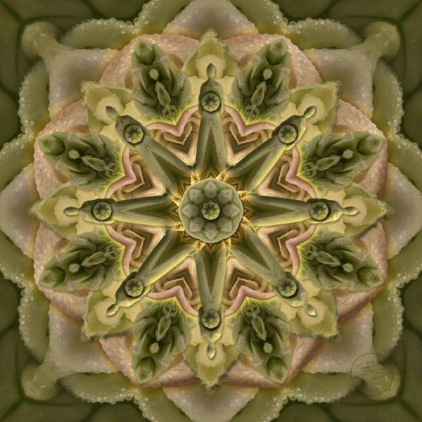 Misty Cabbage by Karen Hochman Brown