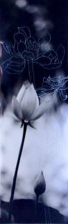Chung-Ping Cheng Love lotus essay #1